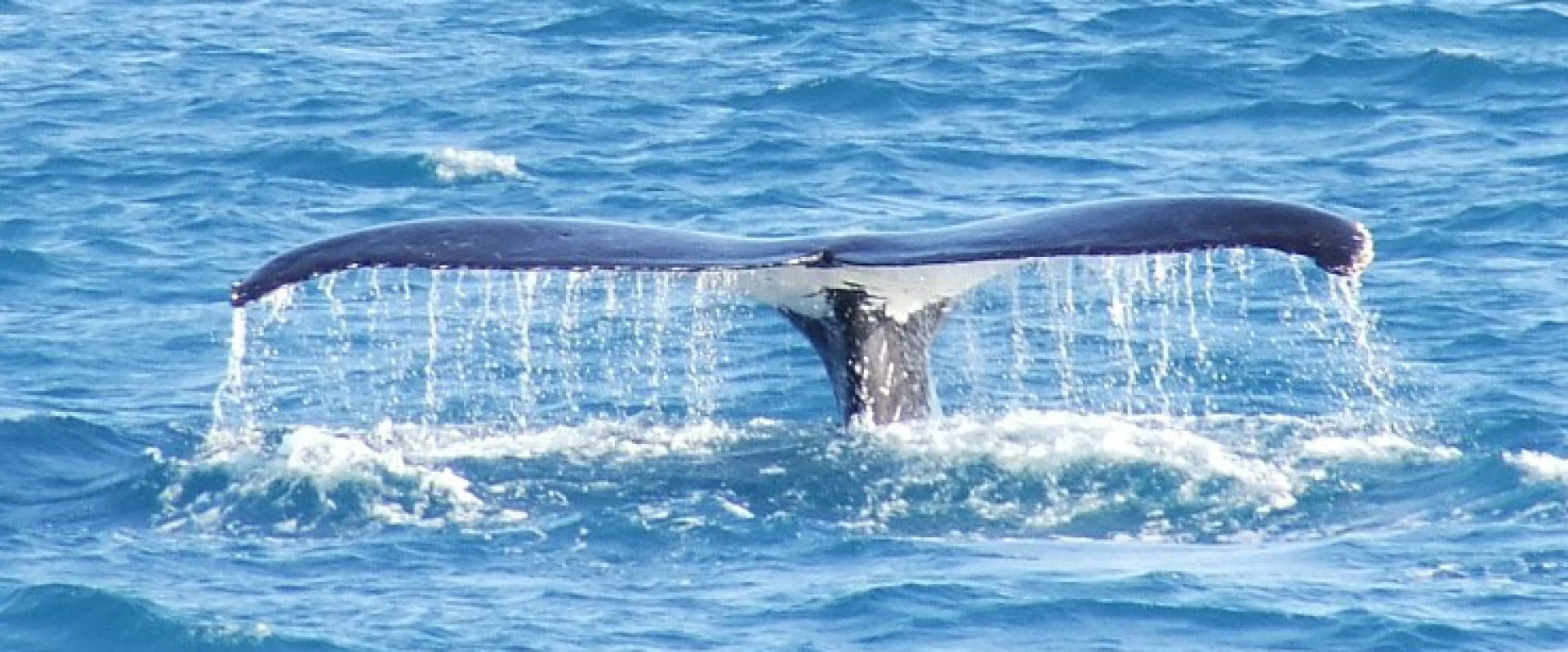 Ik en de Walvis Multimedia Ontwerp